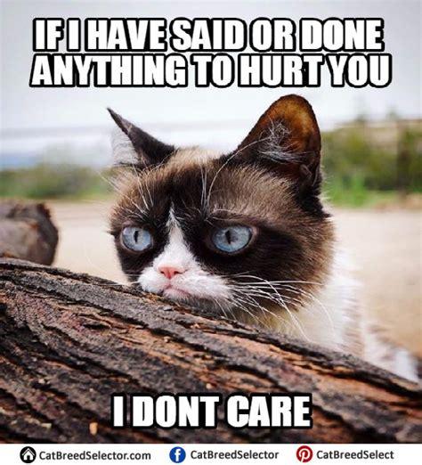 New Grumpy Cat Meme - grumpy cat memes cat breed selector