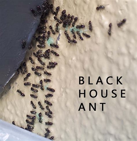17 Best Images About Ant On Pinterest Small Flowers Tough Tiny House Ants