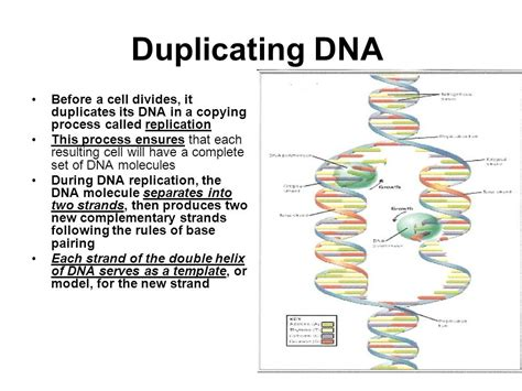 dvd flick menu templates download explain how dna serves as its own template during