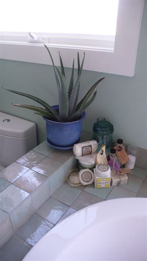 best plants for bathroom with no window best plants that suit your bathroom fresh decor ideas