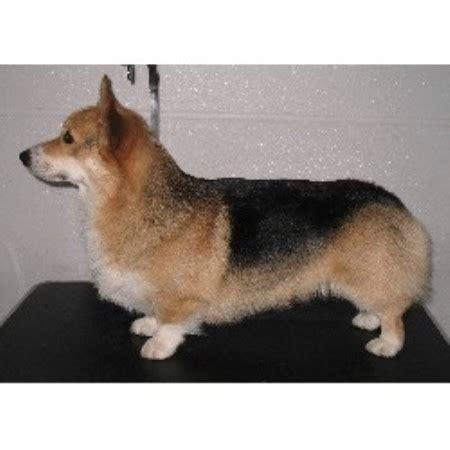 corgi puppies for sale in nebraska tailwind corgis pembroke corgi breeder in imperial nebraska listing id 10568