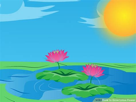 lotus information for lotus flower information in marathi language ppt best