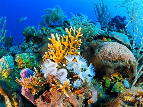 Coral Reef L by Cuba S Coral Reef The Best We Ve Never Seen