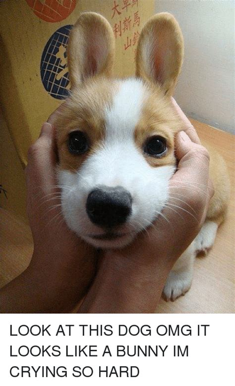 菽つ look at this dog omg it looks like a bunny im crying so