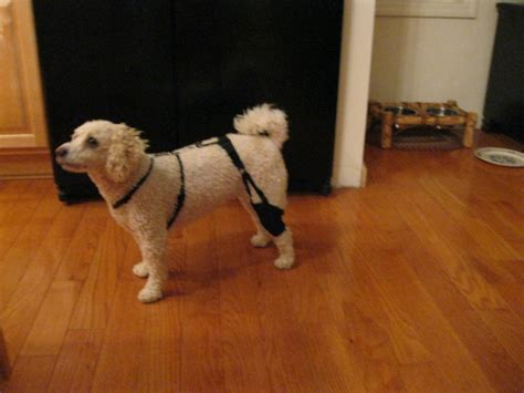 acl brace for dogs knee brace for acl injury breeds picture