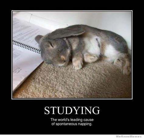 Funny Study Memes - studying the worlds leading cause of spontaneous napping