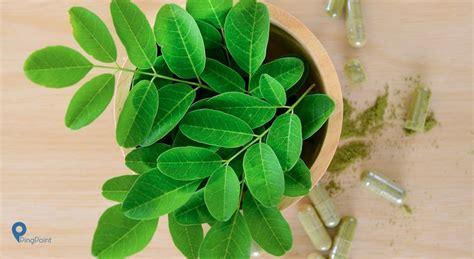 hal  perlu diketahui tentang daun kelor  kaya
