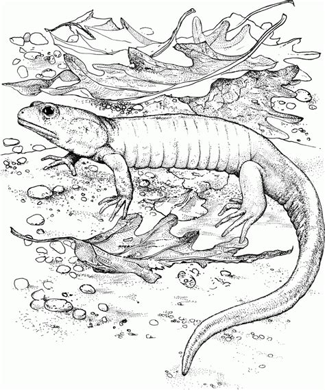 free printable coloring pages lizard free printable lizard coloring pages for kids