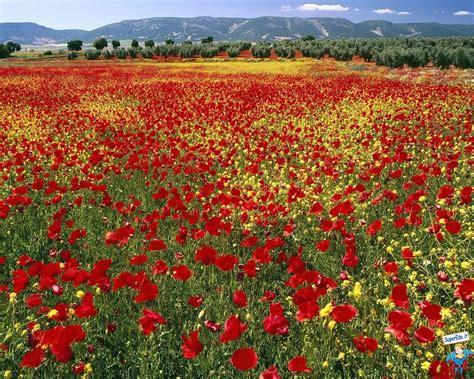 foto di prati fioriti sfondi prati fioriti 42 sfondi in alta definizione hd