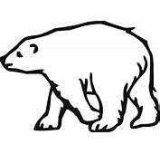 34 Images Of Baby Polar Bear Cartoon  You Can Use These Free Cliparts