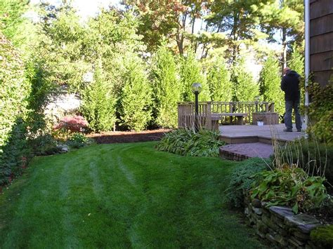best trees for backyard privacy we need some backyard privacy with the new parking lot