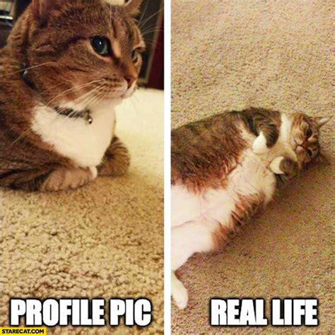 Fat Cat Pictures to Pin on Pinterest   PinsDaddy