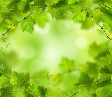 imagenes verdes fondo de pantalla fondos de pantalla follaje verde naturaleza descargar imagenes