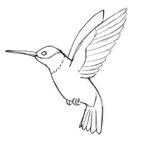 Hummingbird Outline by 1000 Images About Hummingbirds On Hummingbird Hummingbird Illustration And