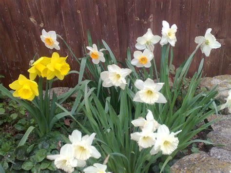 immagini giardini fioriti giardini fioriti podere terra nuova