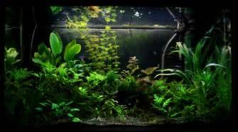 Coffee Table Aquarium File 125l Planted Tank Jpg