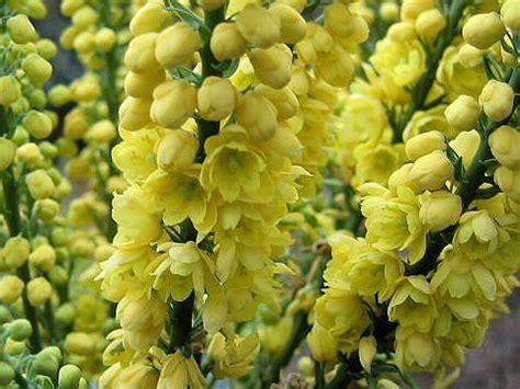 japanese garden plants images  pinterest