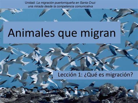 Imagenes De Animales Que Migran | ppt animales que migran powerpoint presentation id 744698