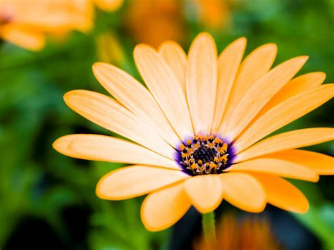 animated flower wallpaper latest wallpapers flowers wallpapers flowers animated