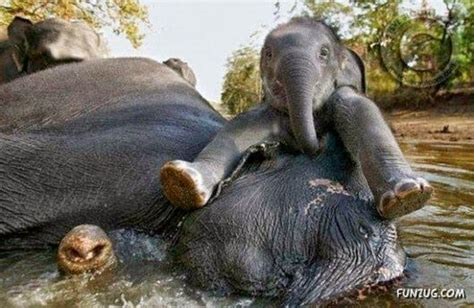 funny pictures jokes  gifs animations baby elephant
