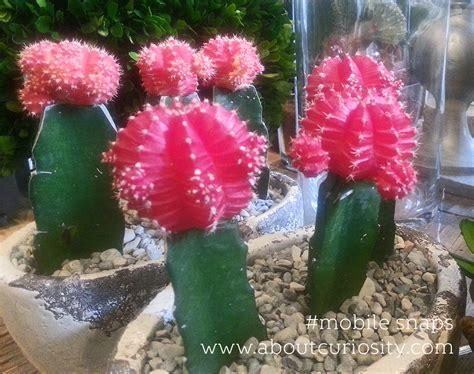 fiori lugano massimo giudici fiori e decorazioni flower shop in