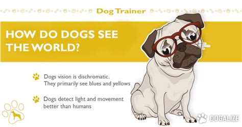 how do dogs be how do dogs see the world dogalize
