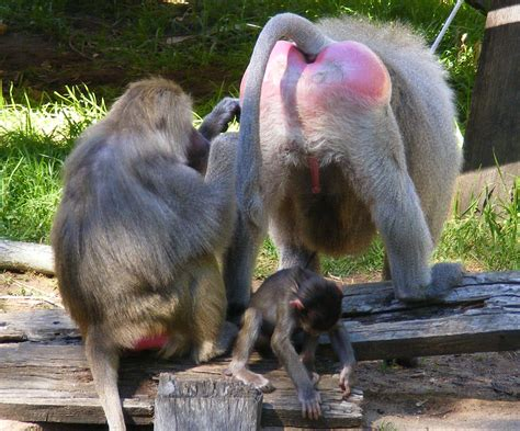 riverbanks zoo shout  south carolina travel family attractions
