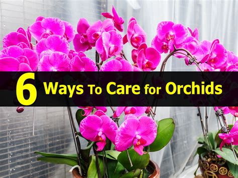 28 best how to care for orchids 6 ways to care for