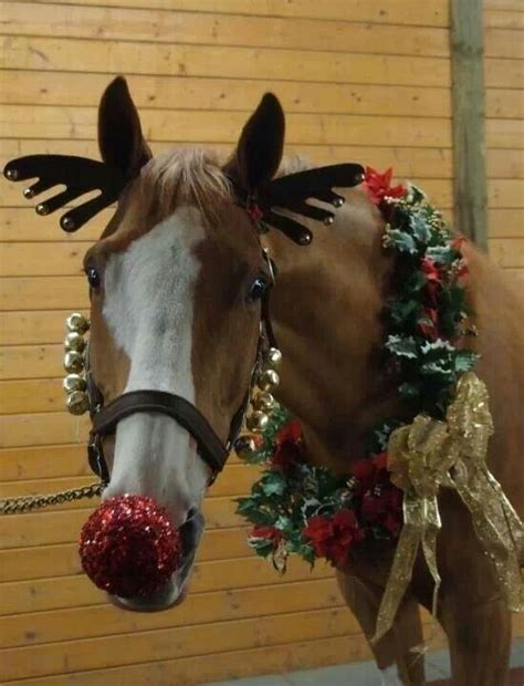 7 best images about horses on pinterest merry christmas