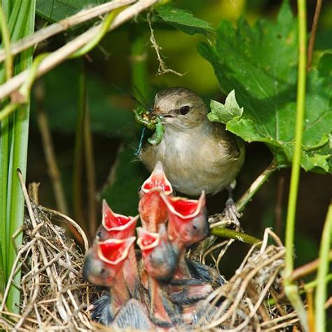 mama birds feeding baby birds 8 heart warming photos