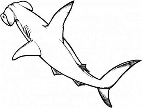 shark head coloring page hammerhead shark clipart line drawing pencil and in