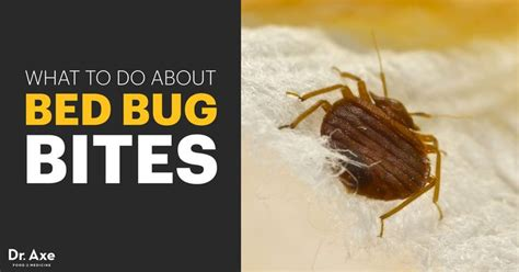 do bed bugs go away 183 best bugs go away images on pinterest