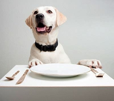 what to serve with dogs can my eat that barking pet concierge