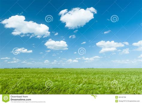 green wheat field and blue sky landscape stock photo