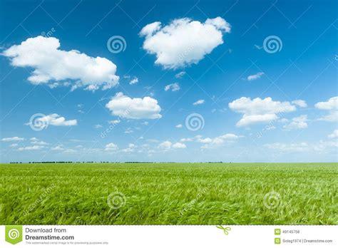 Green Wheat Field And Blue Sky Landscape Stock Photo Blue Sky Landscape