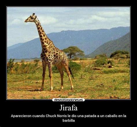 imagenes de jirafas sacando la lengua jirafa desmotivaciones