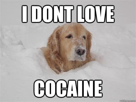 Bear Cocaine Meme - i dont love cocaine misc quickmeme