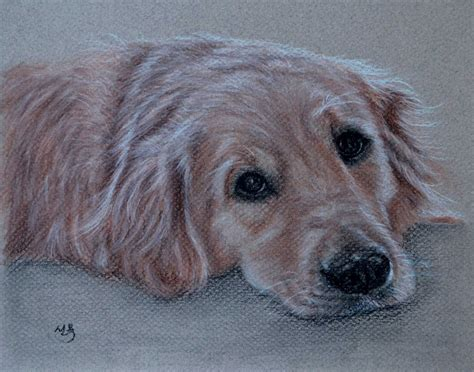 golden retriever drawing simple pics for gt golden retriever drawings simple