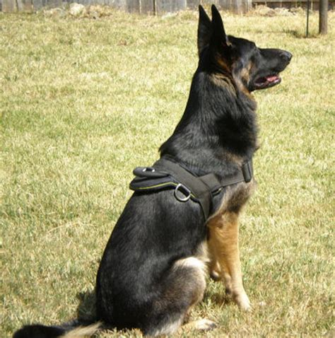 trained german shepherd puppies german shepherd equipment solution harness h6 1070