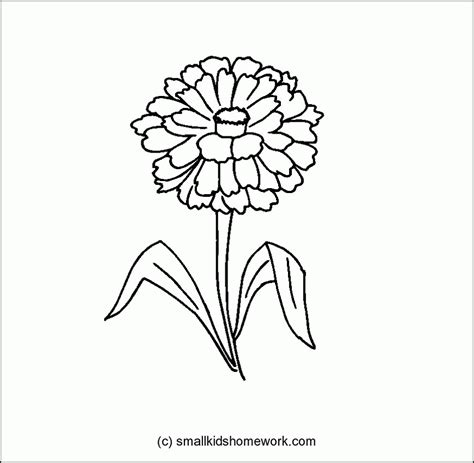 zinnia flower outline and coloring picture with