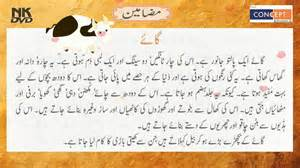 Essay On Children Day In Urdu by Quaid E Azam Essay For In Urdu