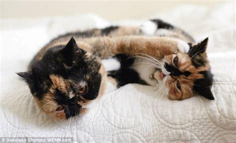 Cinta Untuk Anak Kucing memebon anak kucing terlucu yang mencuri perhatian dunia