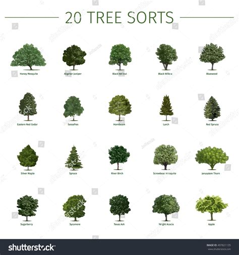 tree types different types of trees with names www pixshark com