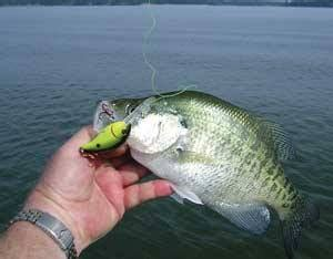 north alabama crappie fishing reports home facebook