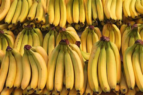 The Bananas the improbable rise of the banana america s most popular