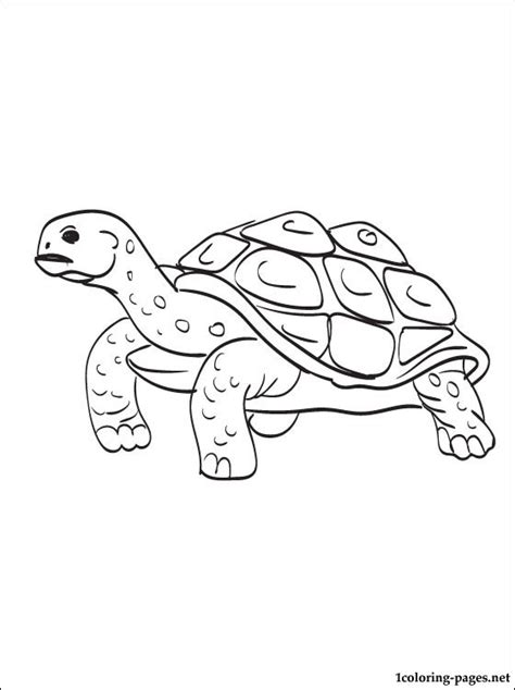 desert turtle coloring page desert turtle coloring coloring pages