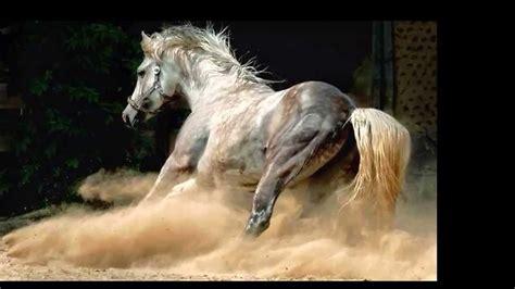 fotos de penes super finos los caballos mas finos el komander ranchero y gallerdo