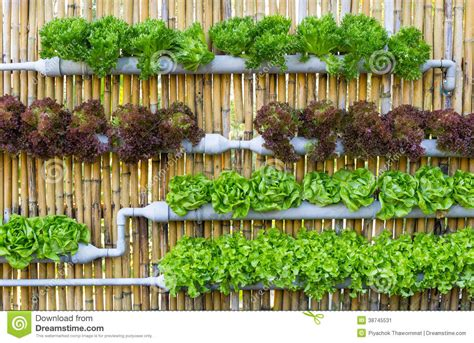 Vertical Indoor Vegetable Garden Hydroponic Vertical Gardening Stock Image Image 38745531