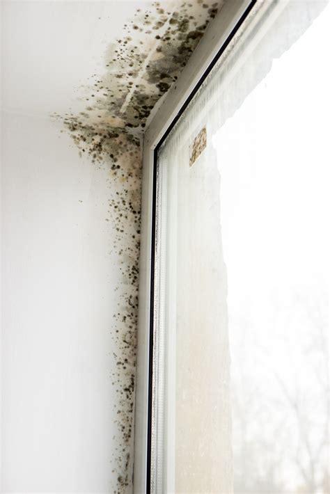 fliesen schimmel entfernen schimmel fliesen entfernen great size of im bad