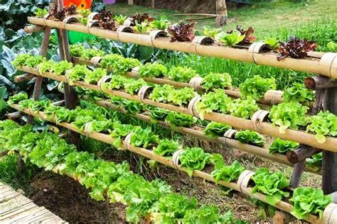 diy hydroponic gardens   design  build
